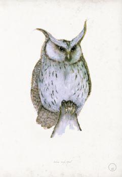 Indian Scops Owl - artist signed print